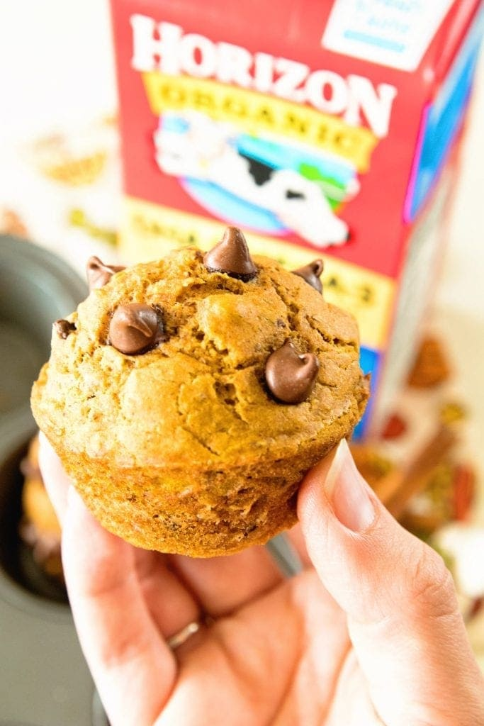 Homemade Pumpkin Muffins with Chocolate Chips!