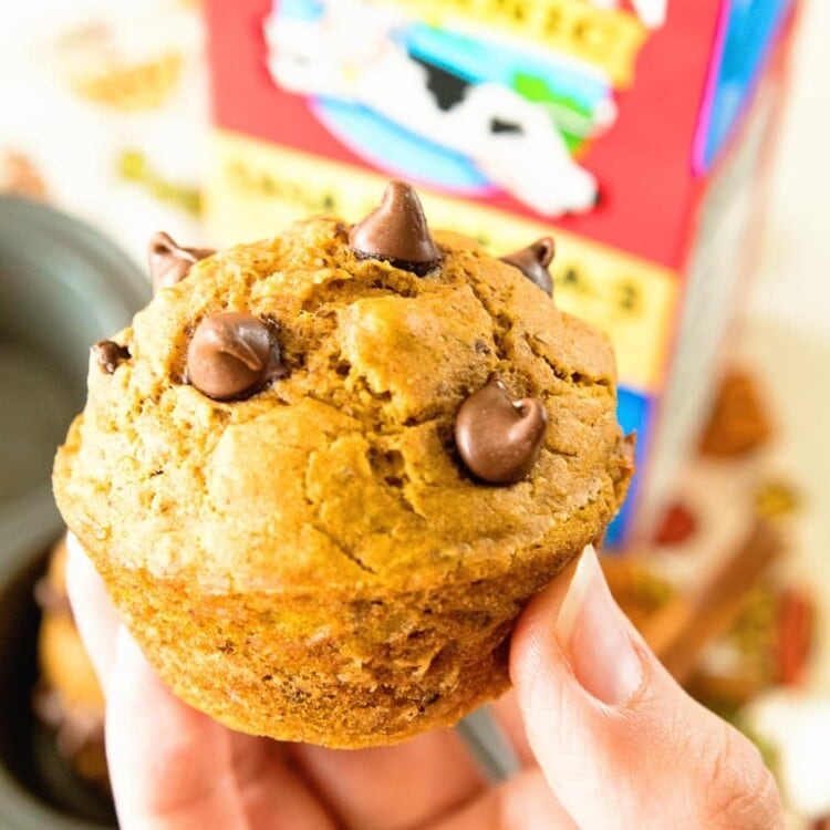 Hand holding a chocolate chip pumpkin muffin in front of a carton of milk